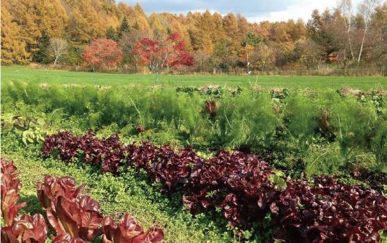 軽井沢の自然栽培農家「オルトアサマ」さん