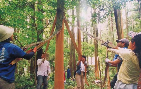 日本の森林再生に有効な天然乾燥間伐法「きらめ樹」