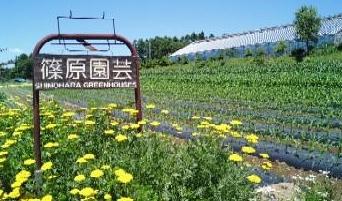 篠原園芸2